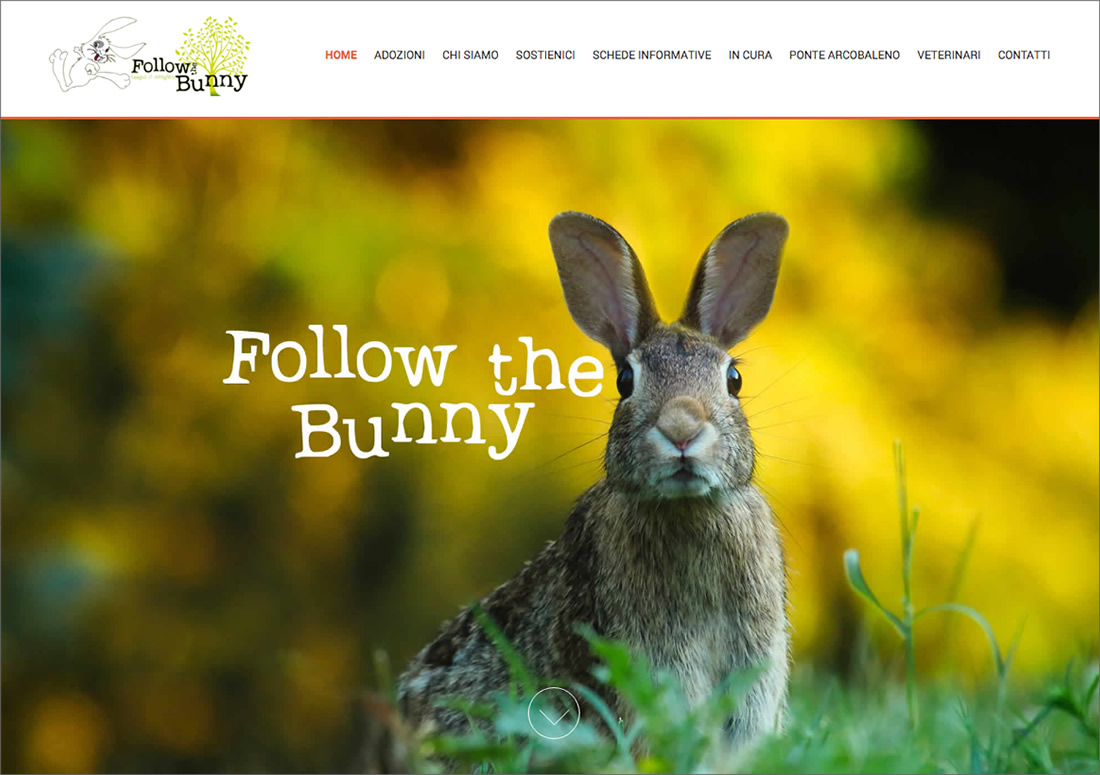 Follow The Bunny – homepage